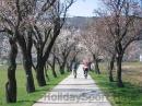 Balatongyörök_kerékpártúra